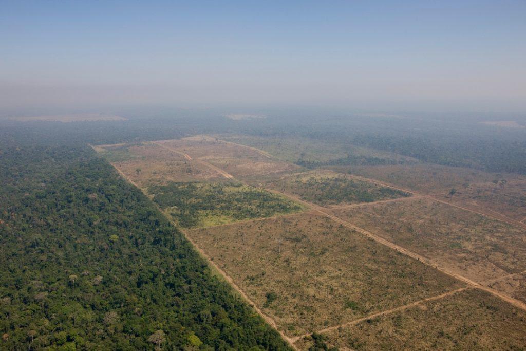 Área desmatada para produção agropecuária dentro da Floresta Nacional de Jamanxim. Foto: Daniel Beltrá/Greenpeace.