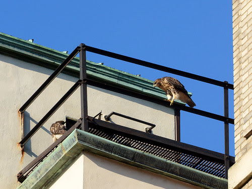 Cathedral Fledges A & B