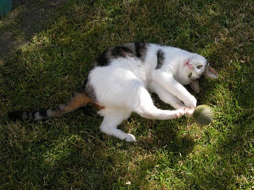 Oimo plays footie with a tennis ball