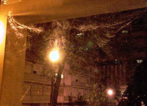 pombo na janela