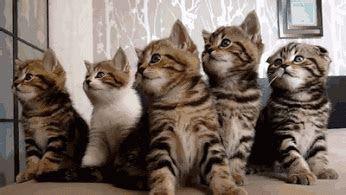 animasi kucing gif