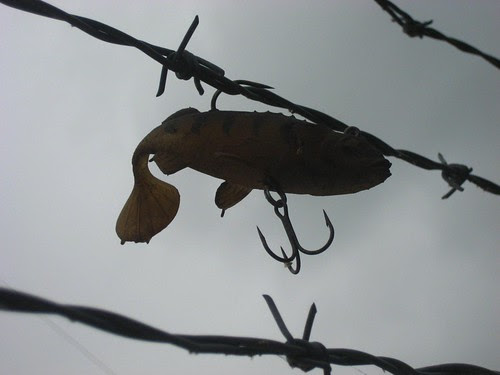 Fishhook on barbed wire