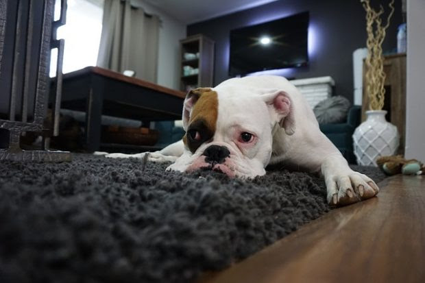 Pet-Friendly Living Room: The Best Tips to Protect Your Furniture