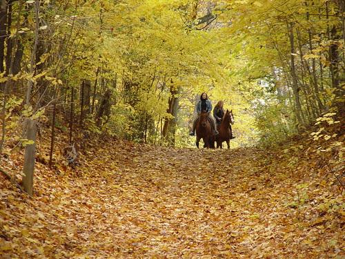horseback riders on fall trail