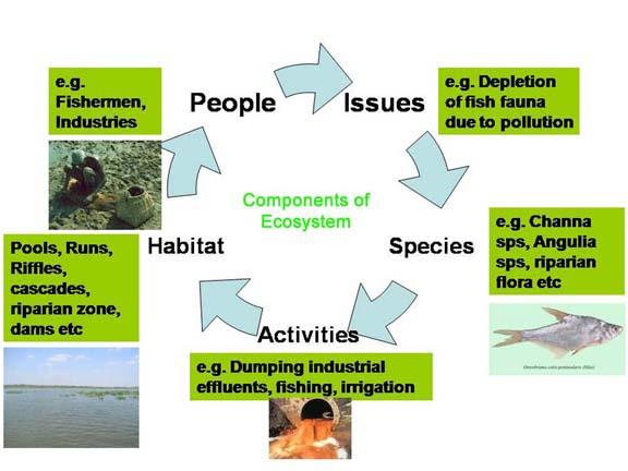 File:Ecosystem Componants.jpg
