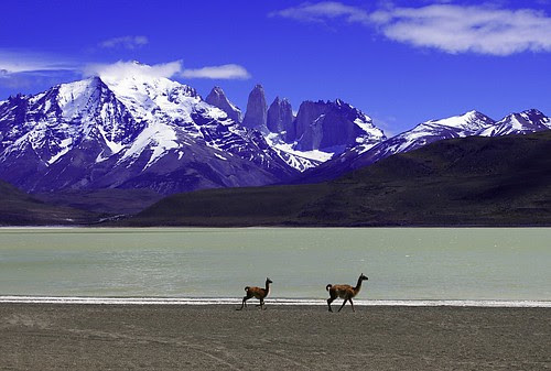 Chile llamas by doug88888