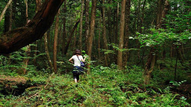 Resultado de imagen para el bosque de aokigahara