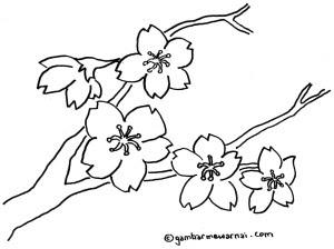 Gambar Bunga  Sakura  Untuk Diwarnai Gambar Mewarnai