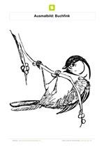 ausmalbilder vogel kostenlos ausdrucken