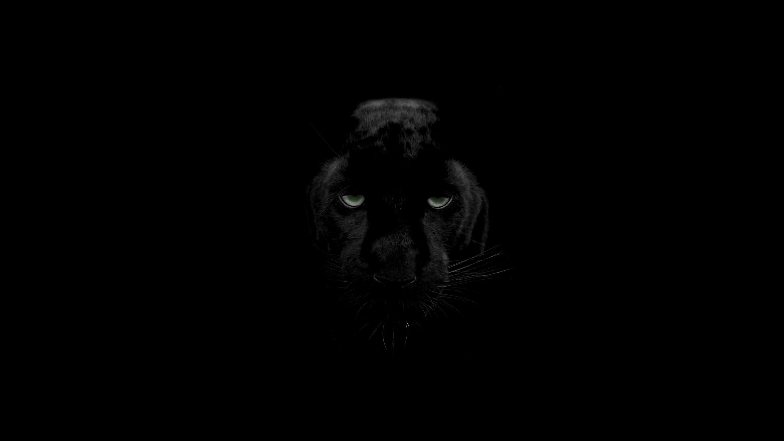 Animal Black Panther Iphone Wallpaper