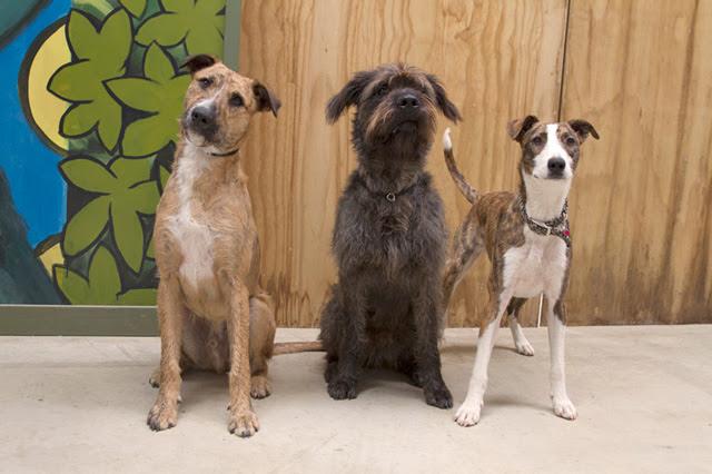 All three dogs