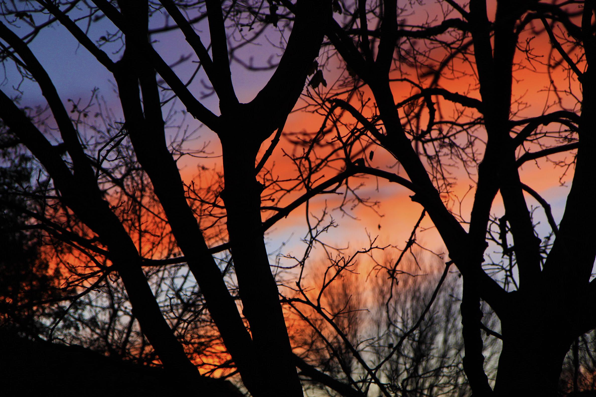 back yard sunset2