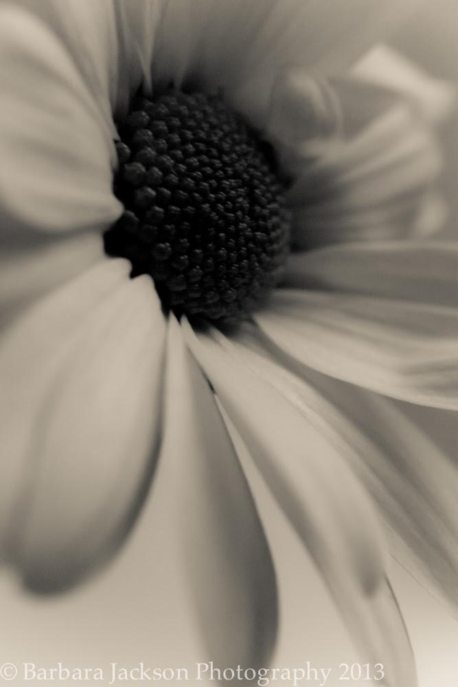 Flower cream 6