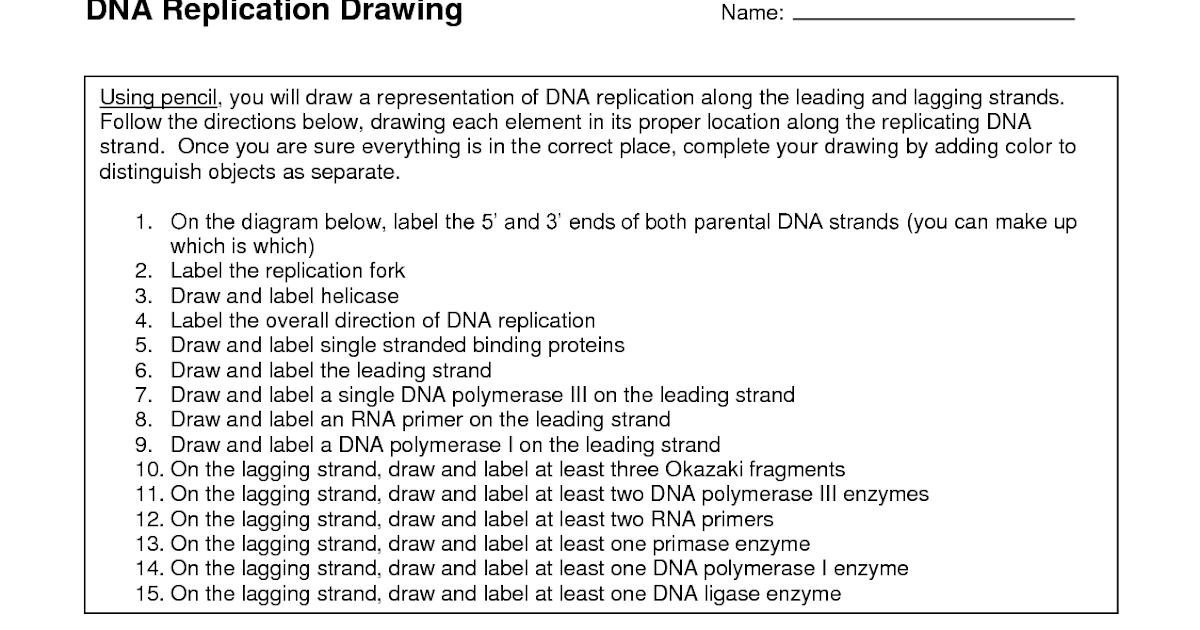 31 Dna Replication Coloring Worksheet - Worksheet Project List