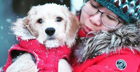 Cuộc sống Toronto - Tuyết lại rơi nữa rồi- Vlog, Mochi rất thích chơi với tuyết