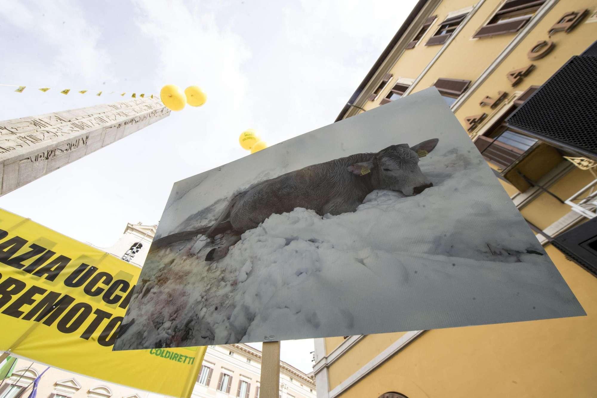 Gli allevatori terremotati protestano a Montecitorio