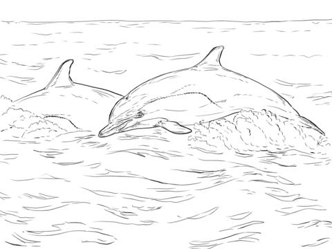 ausmalbilder delphin zum ausdrucken - zeichnen und färben