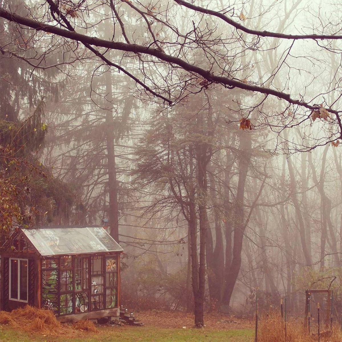 Uma cabana de vidro no meio da floresta 09