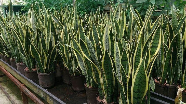 plantas para cultivar em casa