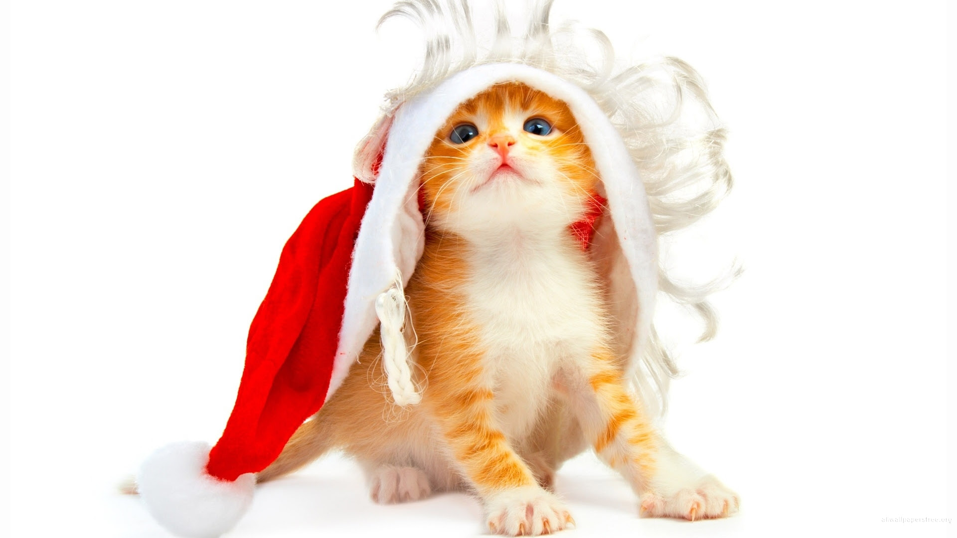 Cat In The Hat Wallpapers Free Download On Clipartmag