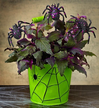 Best Halloween Flower Arrangements Great Way To Shop Shopping For Deals Online