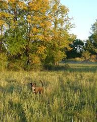 Take Me Hunting! by FreeWine