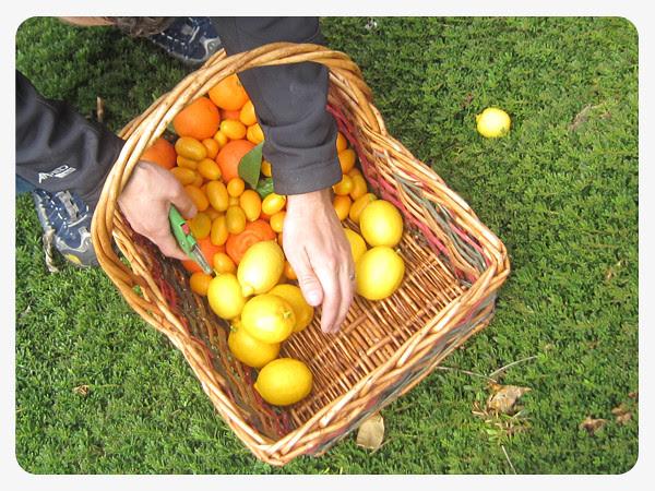 san diego citrus