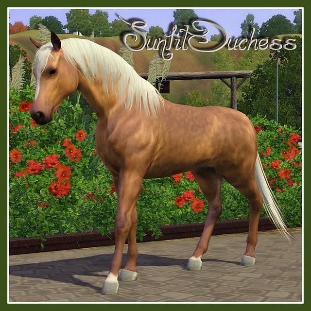 Sunlit Duchess - covershot 01
