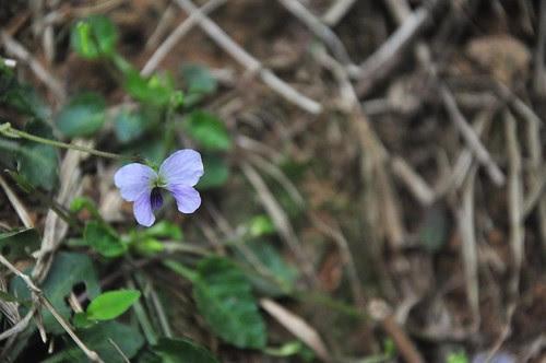 不知名小花