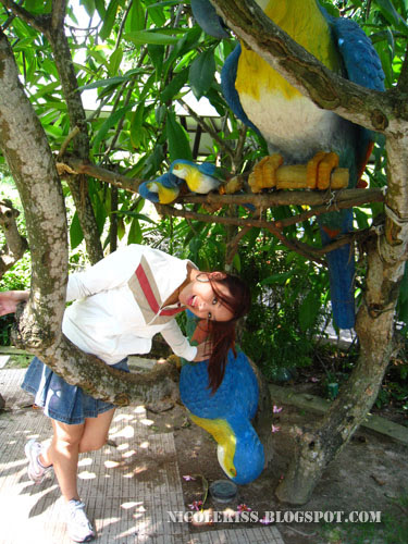 me and stone parrots