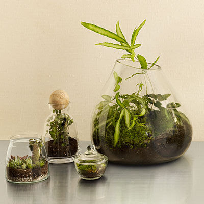 Terrarium Garden Pictures Photos And Images For Facebook Tumblr