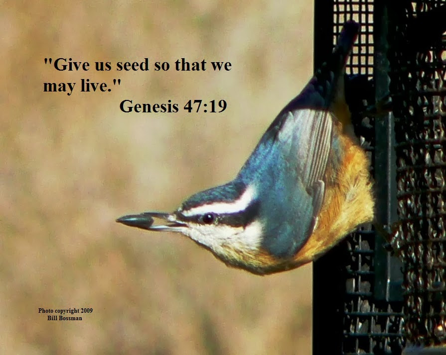 Quotes About Feeding Birds 48 Quotes