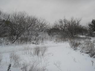 December 2015 Snow 9