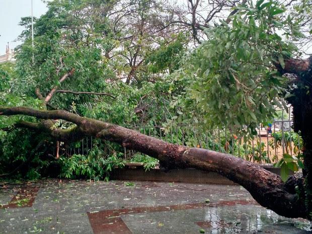 Árvore cai na Praça da Piedade, em Salvador (Foto: Ramon Ferraz/TV Bahia)
