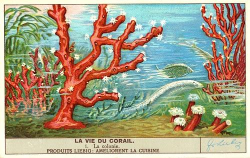 corail 1