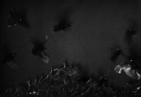 The Solitude of Ravens, by Masahisa Fukase