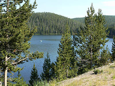 lac big horn forest 2.jpg