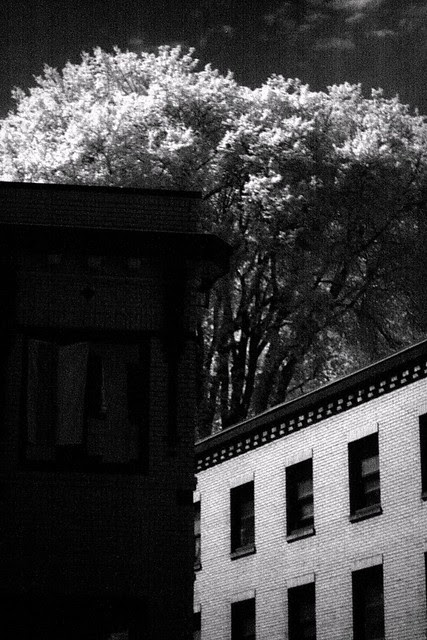 infrared, downtown portland