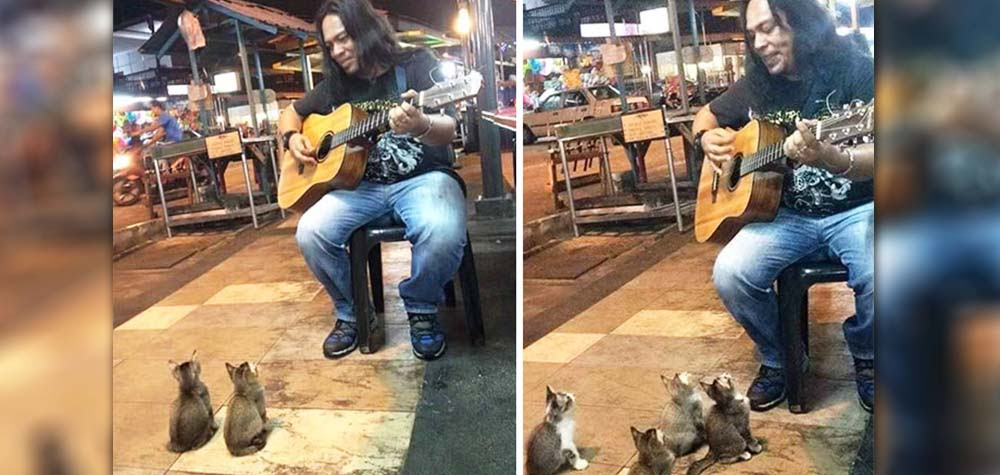 Todos ignoravam esse músico, até que a plateia mais fofa do mundo apareceu...