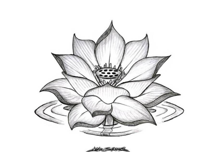 Sketsa Gambar Bunga Teratai Yang Mudah Digambar Koleksi Gambar Bunga