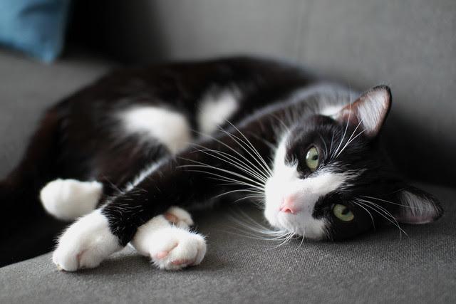 Pet Photography -free watermarking