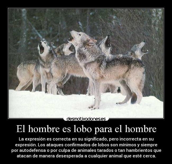 El Hombre Es Lobo Para El Hombre Desmotivaciones