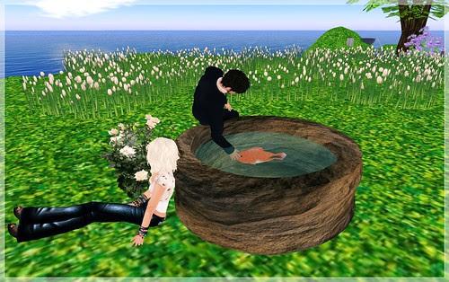 Review - Pocket Gardens - Castalia Basin with Koi, small