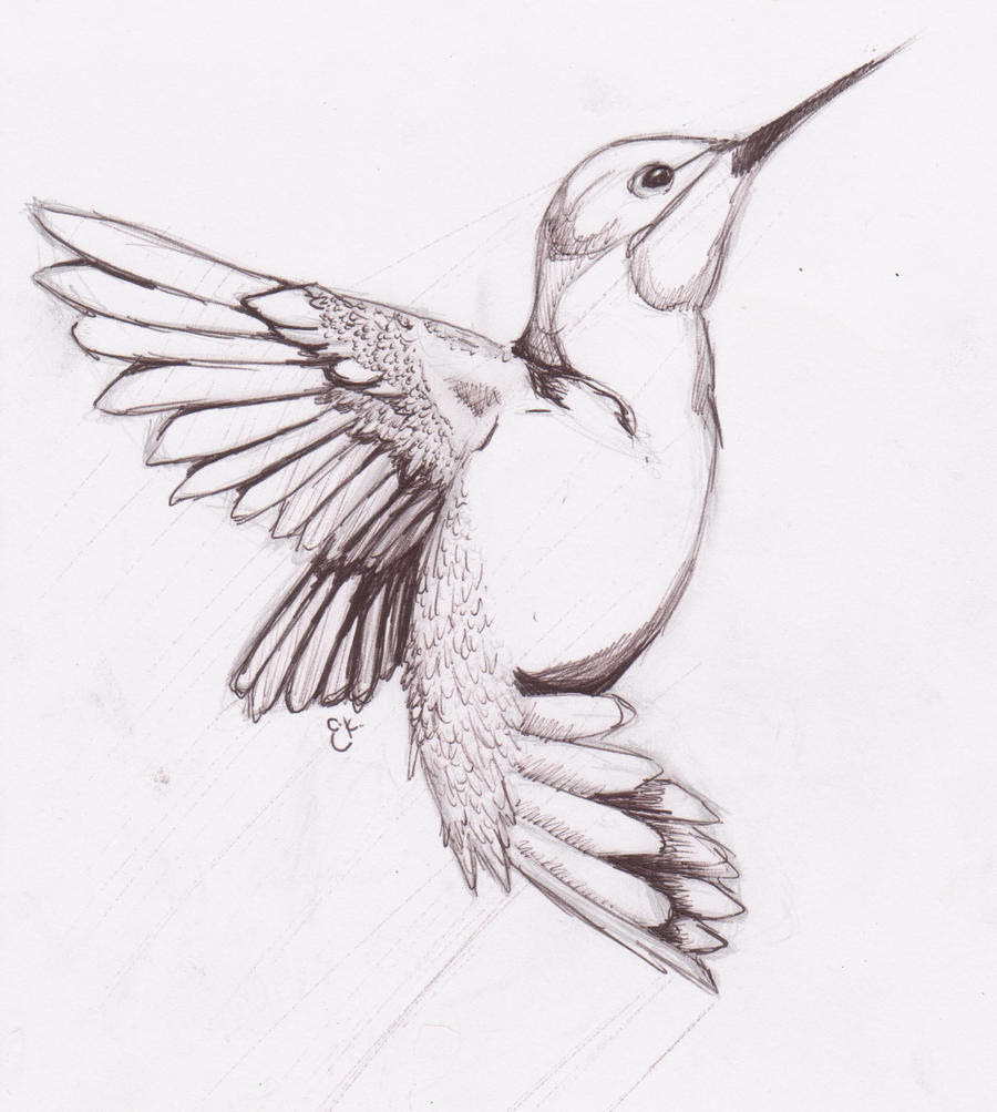 Humming_Bird_Sketch_by_chibikitty343