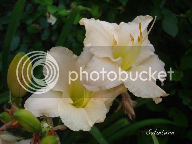 photo f64aa45a-8303-471d-9b4f-d6a200431772.jpg