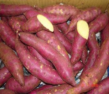 Image result for orange fleshed sweet potato in Nigeria