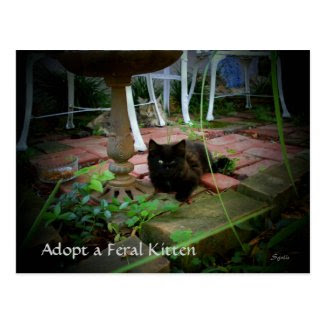 Feral Cat Adoption Postcard