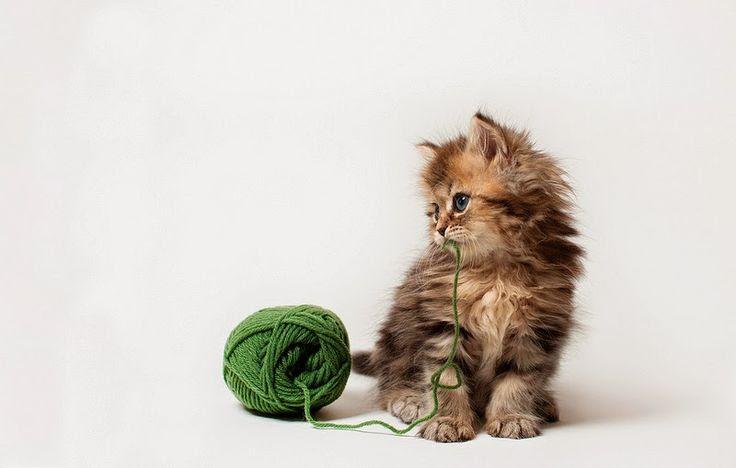 Ben Torode: Daisy, ¿el gato más tierno del mundo?