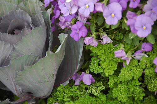 Violets, Parsley, and Cabbage