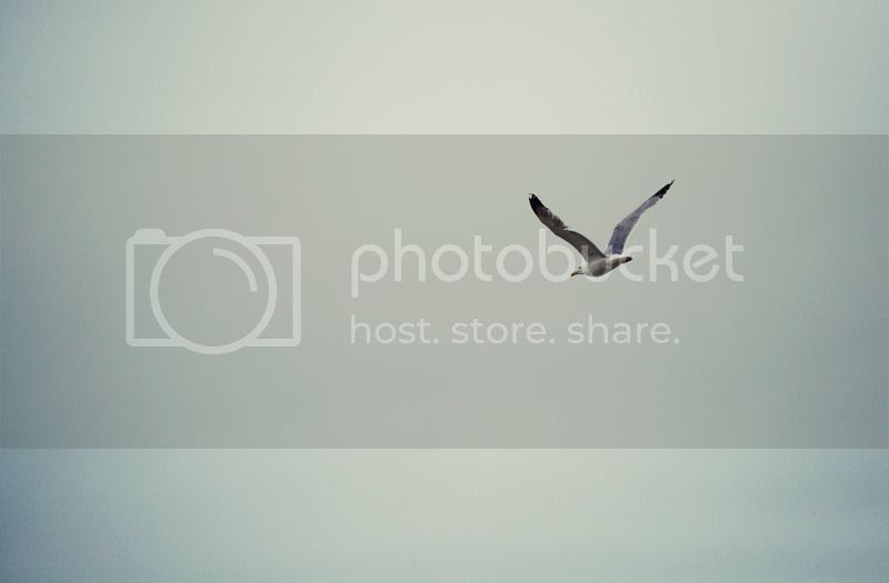 photo IMG_2919800_zps343860cd.jpg